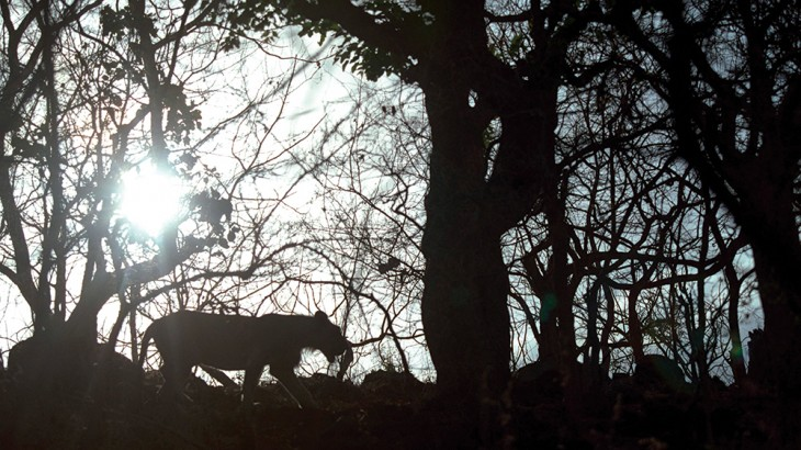 Gir Forest of Western India