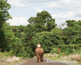 Elephant Preservation