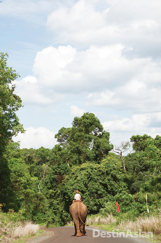 A Bunong mahout and his mount on the road to Mondulkiri's scenic Bou Sra waterfall.