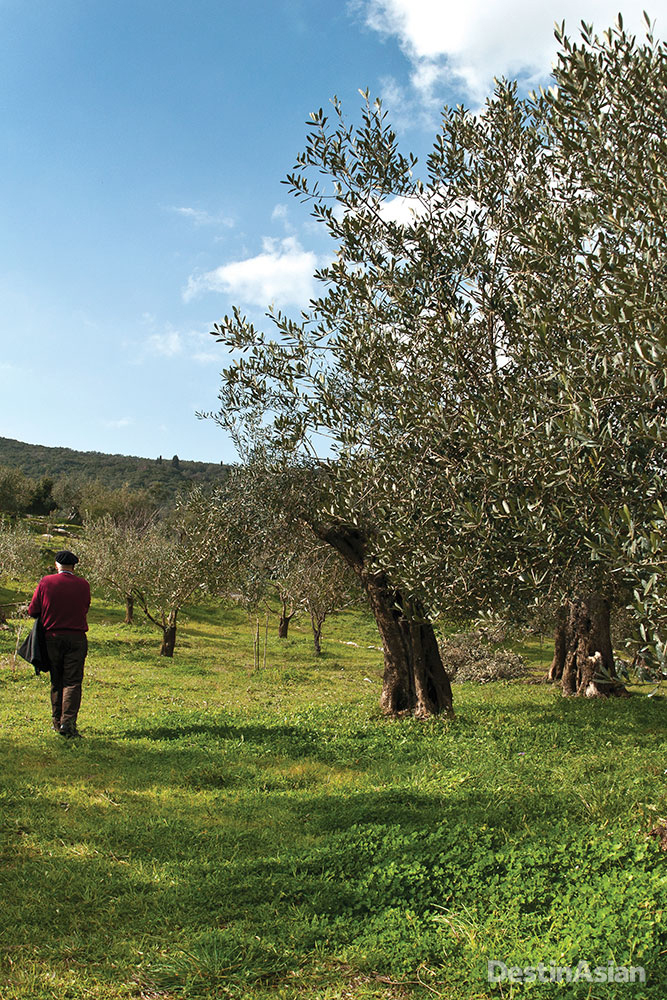 Olive groves swatch the island's craggy interior.