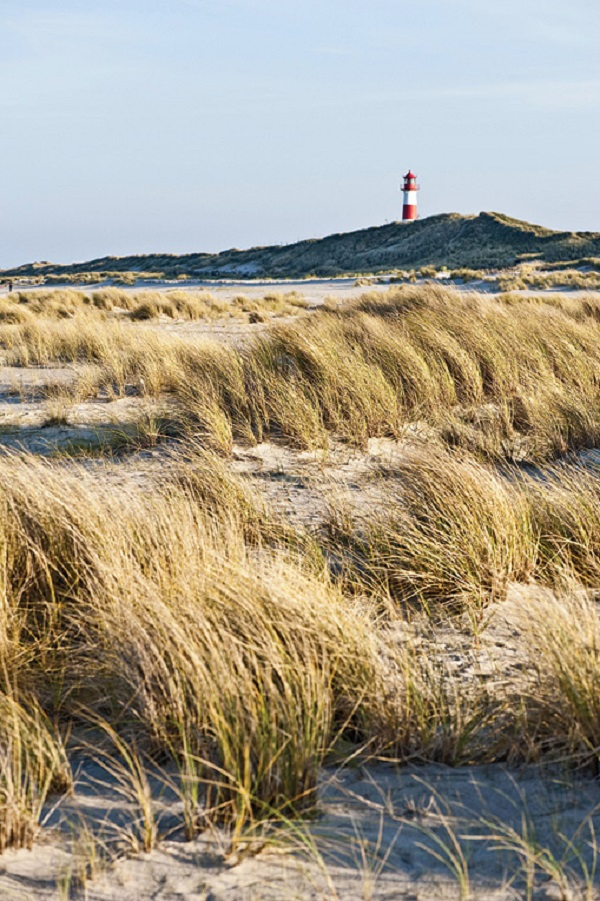 A view across the dunes.