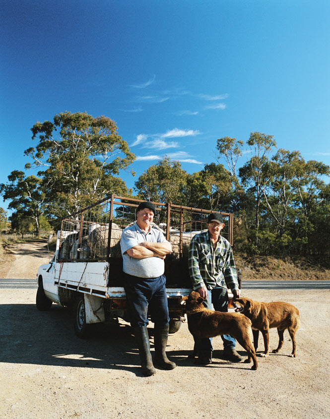 Sheep farmers on the road to Hobart.