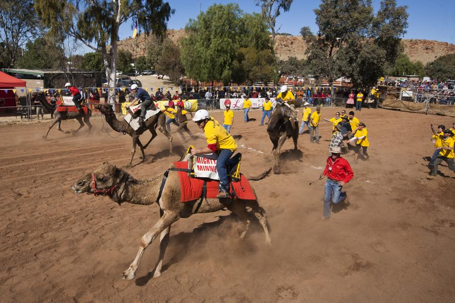 The unpredictable excitement of camel racing.