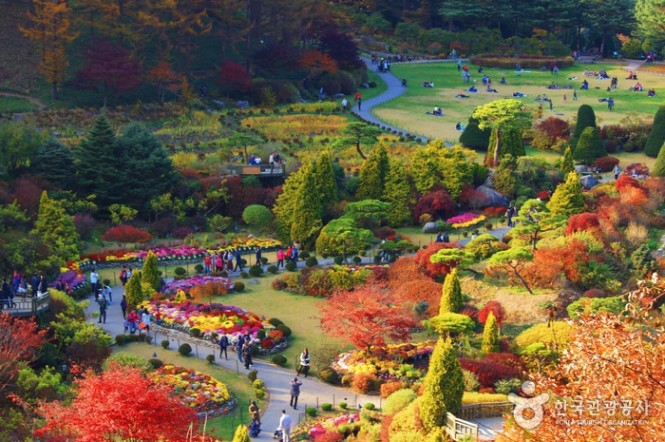 The garden in autumn. All photos are from the Korean tourism board.
