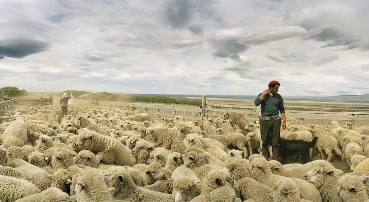 Gaucho Patricio Varcaza in a sheep pen in Estancia Cerro Guido.