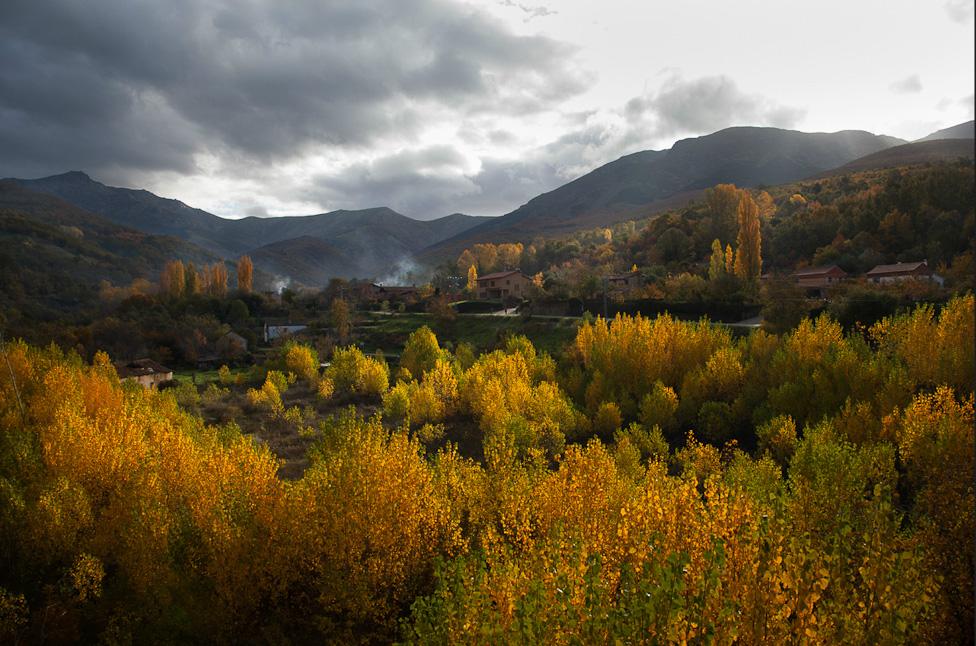 Autumn colors on a hillside above Hervás.