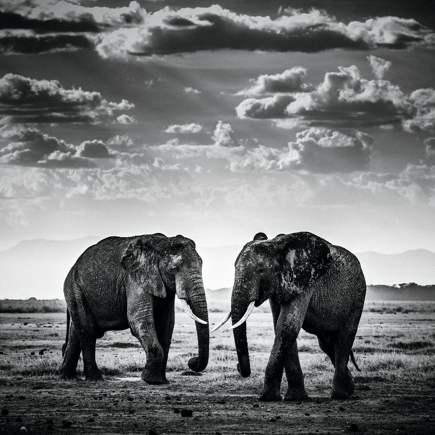 The Family Album of Wild Africa; Elephant - The Road is Closed