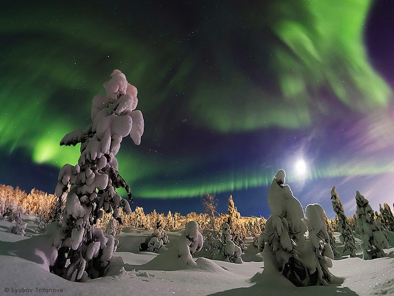 'The Enchanted Forest' by Lyubov Trifonova (www.vk.com/id10329233). The Moon and the northern lights lit up the snow-covered forest in Murmansk, northwestern Russia, December 2014. The first winner in the Beauty of the Night Sky category.
