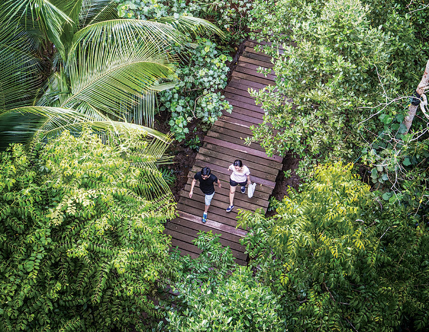 A bird's-eye view of the boardwalk that passes through the mangroves of the Check Jawa Wetlands.