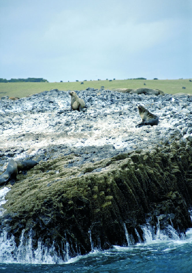 A seal colony near Stanley.