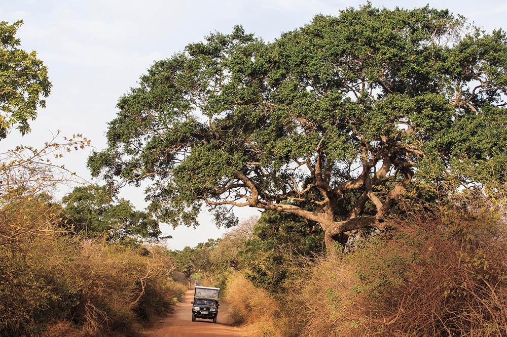 On safari in Sri Lanka's Yala National Park.