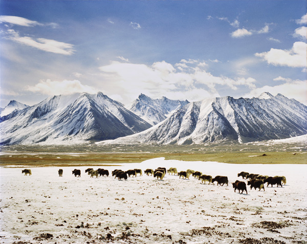 The picturesque alphine grasslands that surround Lake Chaqmaqtin sustain herds of goat, sheep, and yak
