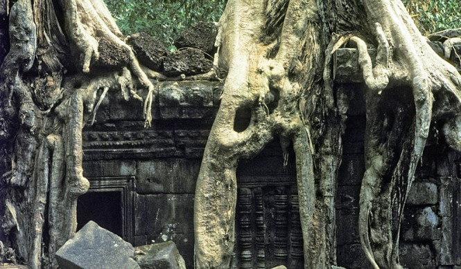 Ta Prohm at Angkor Wat in Cambodia
