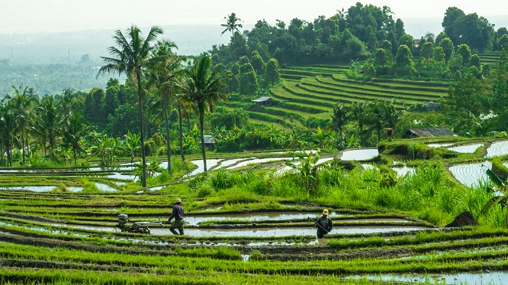 """Bali to Introduce """"Green Zones"""" for Tourists"""