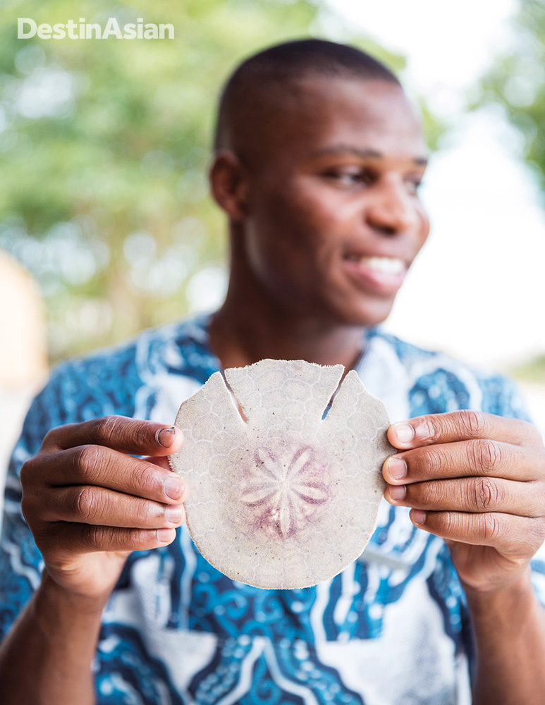 A pansy or sand dollar, found in abundance on the islands