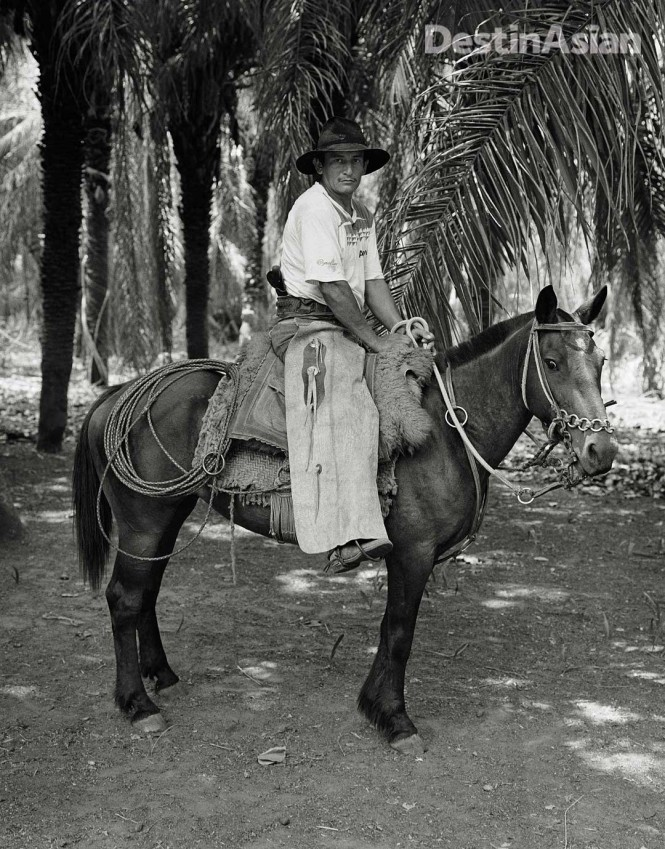 The compact horses of the Pantanal are uniquely adapted to their wetland environment.