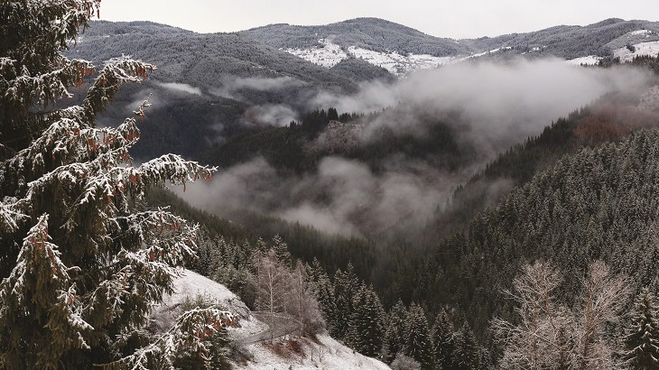 Mountain scenery in the pine-clad Rhodopes.