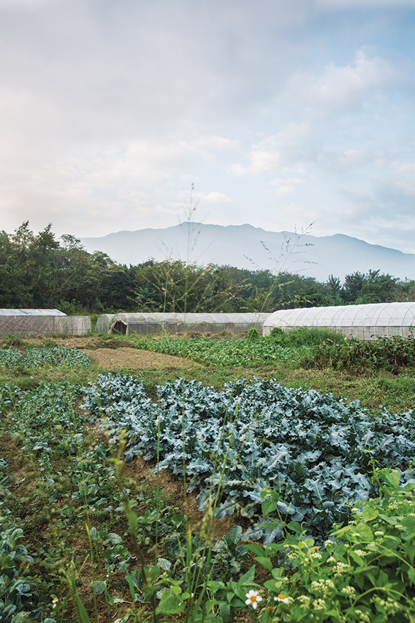 One of a growing number of organic farms in the Kam Tim area of the New Territories.