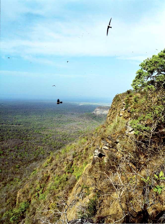 Vulture-spotting in Bandhavgarh.