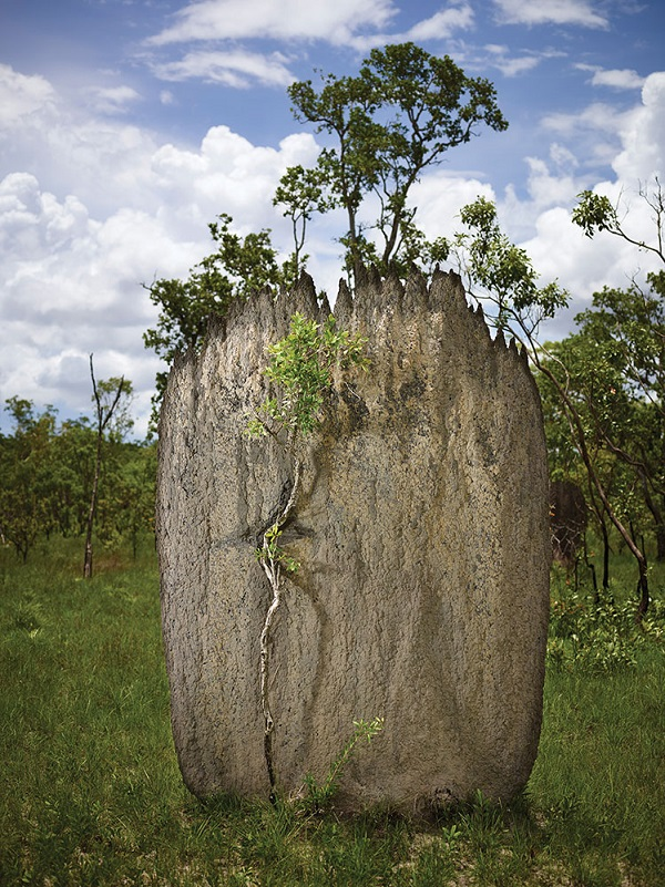 A two-meter-high mound built by magnetic termites in Litchfield National Park.