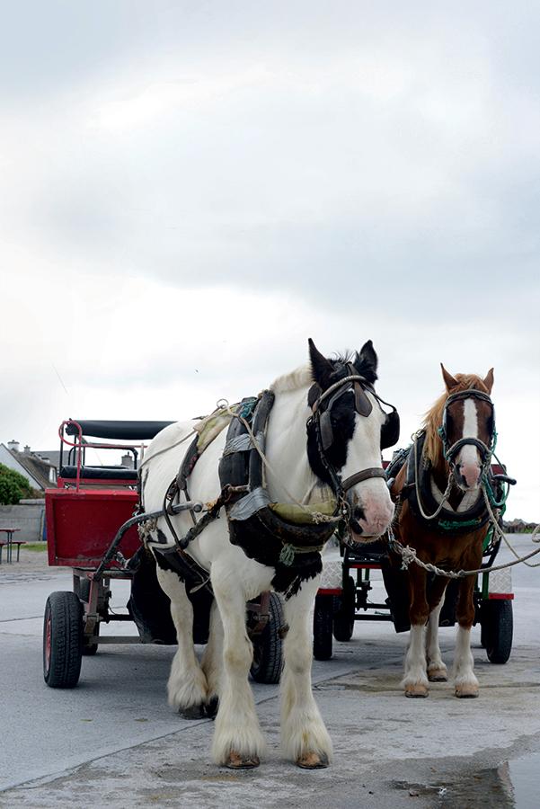 Horse carts on Inisheer.