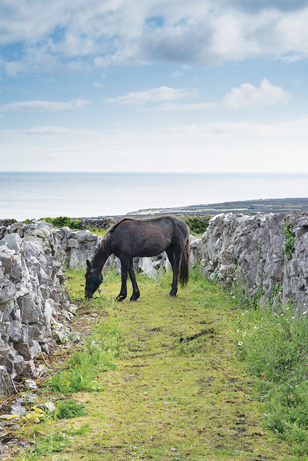 Stone walls crisscross the fields of Inishmaan.