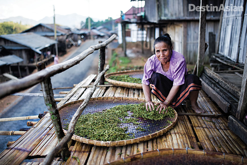 Tea leaves are rolled to release their enzymes and essential oils, which begins the oxidation process.
