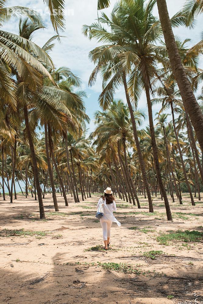 Coconut palms frame empty stretches of beach along Kasaragod's coast.