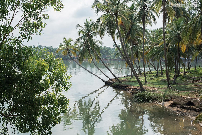 A scenic stretch of the Valiyaparamba backwaters.
