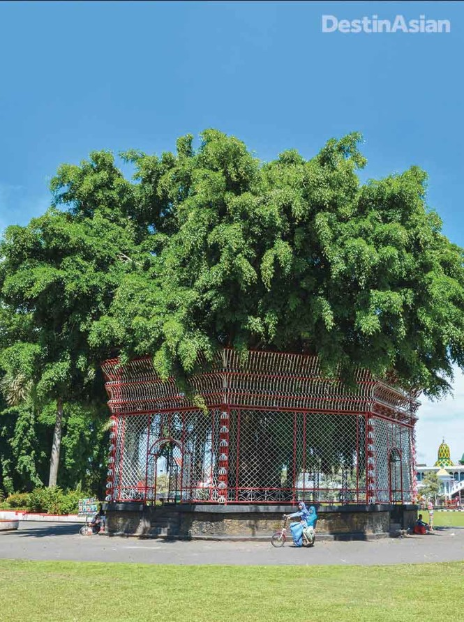 An enormous banyan tree marks the center of the alun-alun, Blitar's main square.