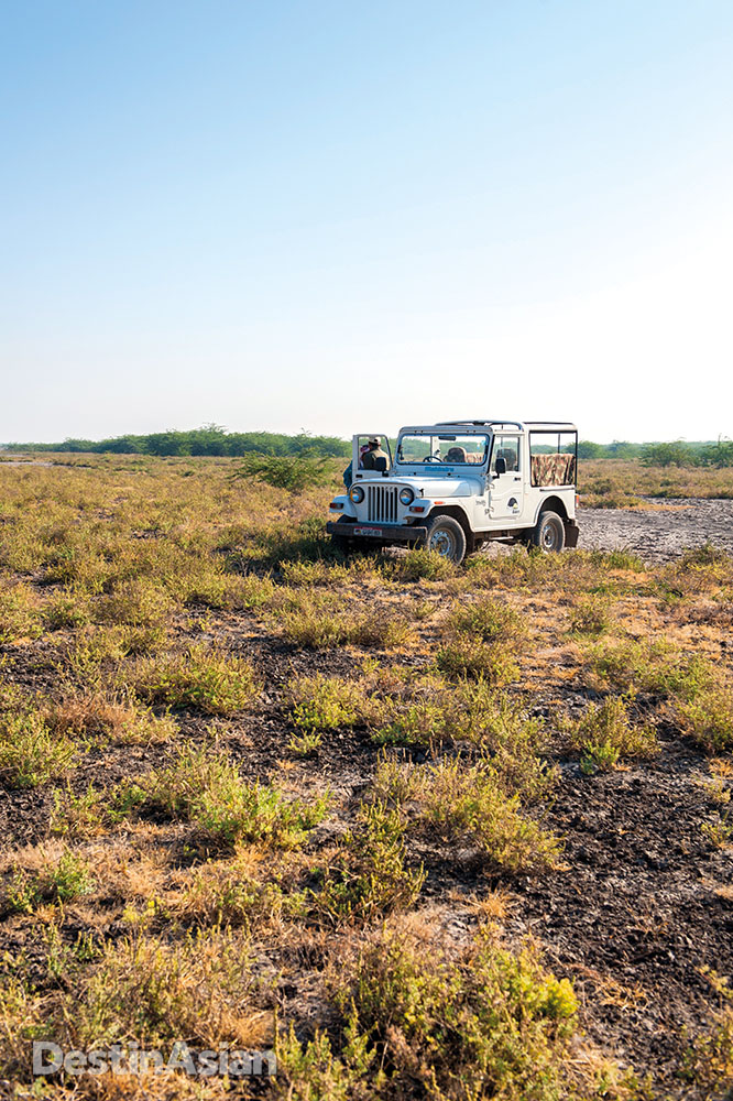 A jeep takes tourists sihtseeing in the Little Rann of Kutch, the smaller sibling of the Great Rann.