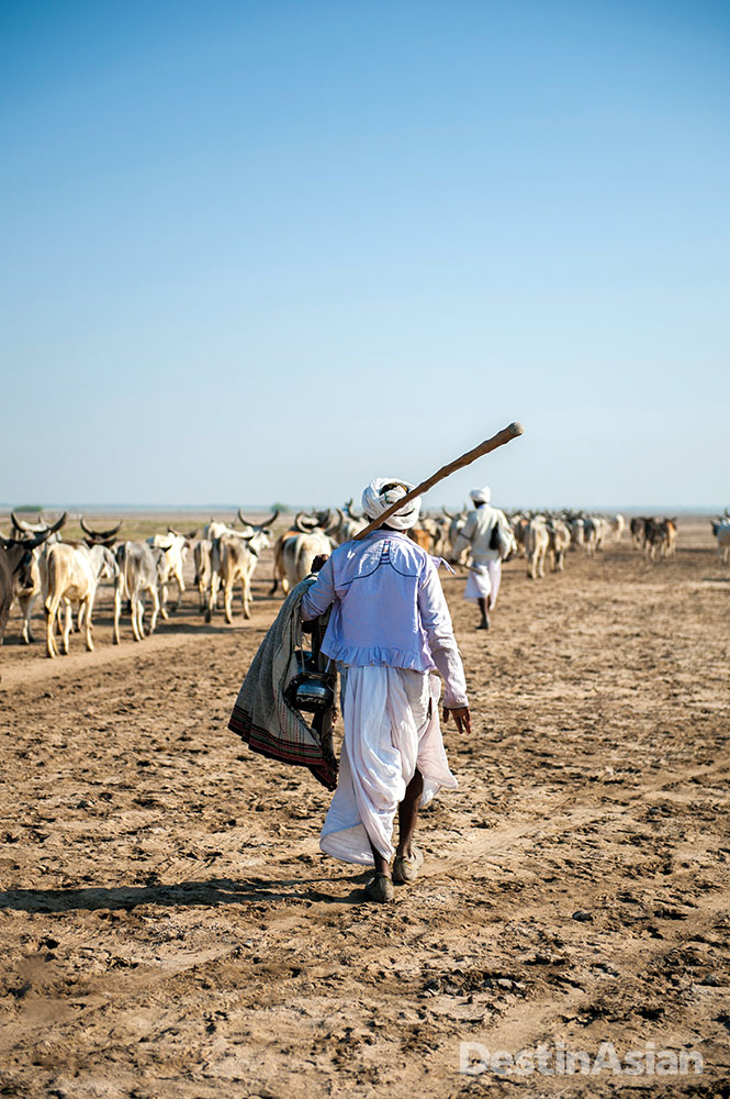 Men of the nomadic Rabari tribe leading their cattle across the wilderness of eastern Kutch.