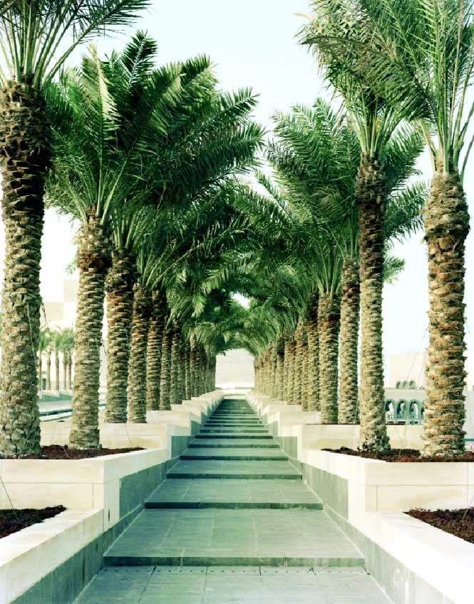 Date palms line the causeway leading to the museum.