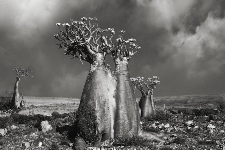 Desert Rose (Wadi Fa Lang).