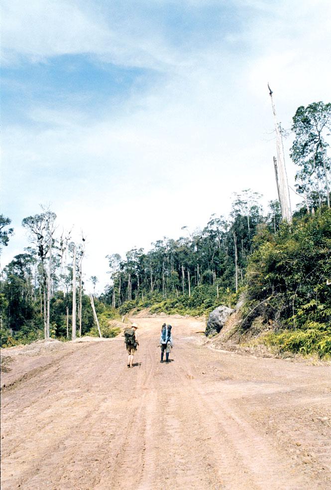On The Logging Road Beyond The Tama Abu Ridge.