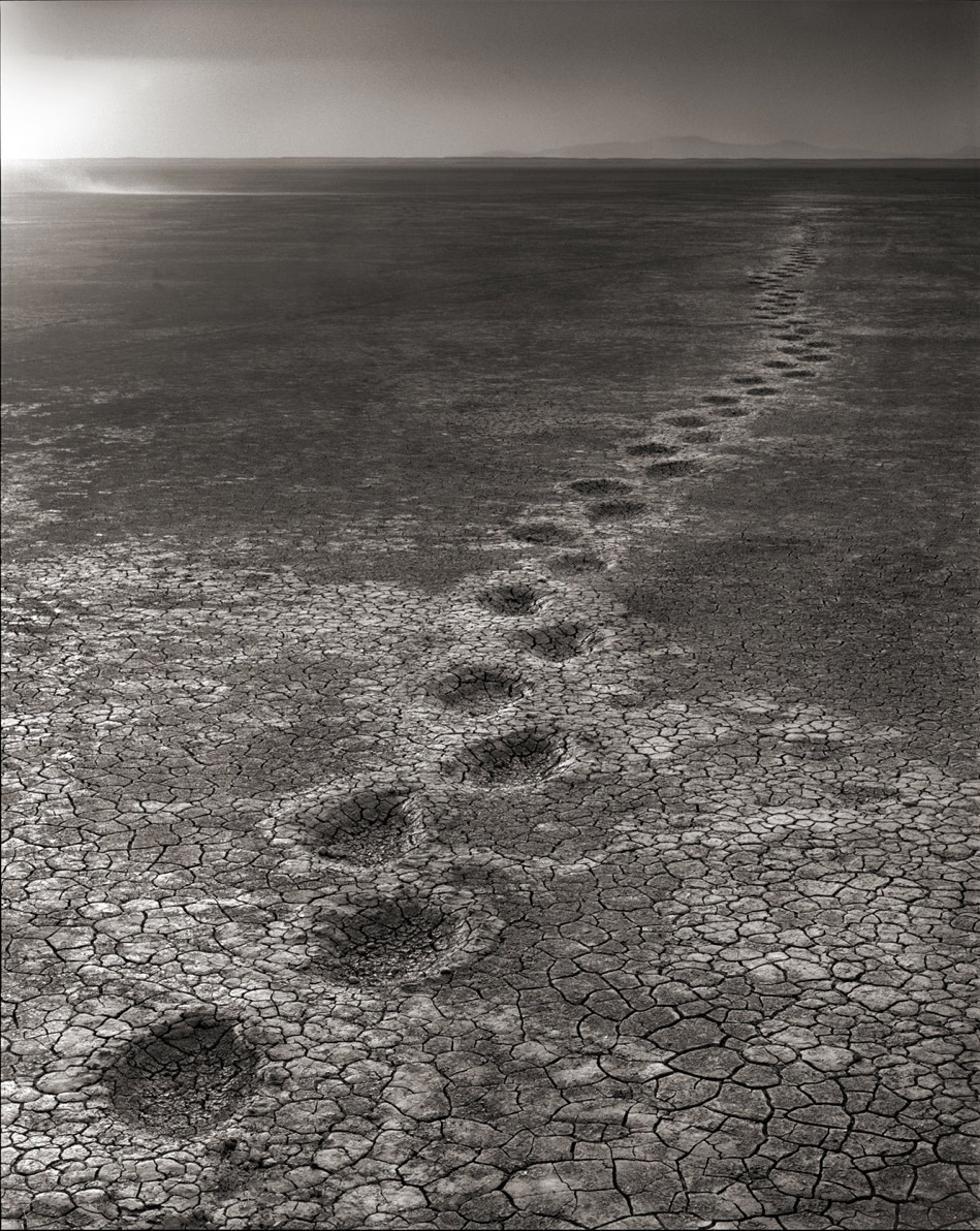 Elephant footprints across a dry lakebed.