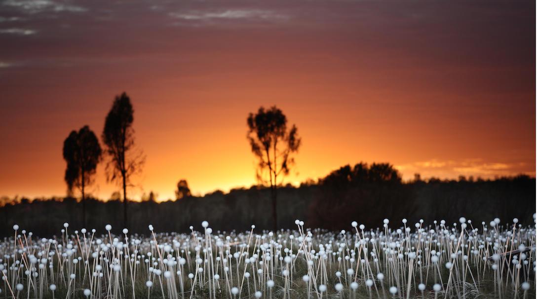 Field of Light_0X0A1242