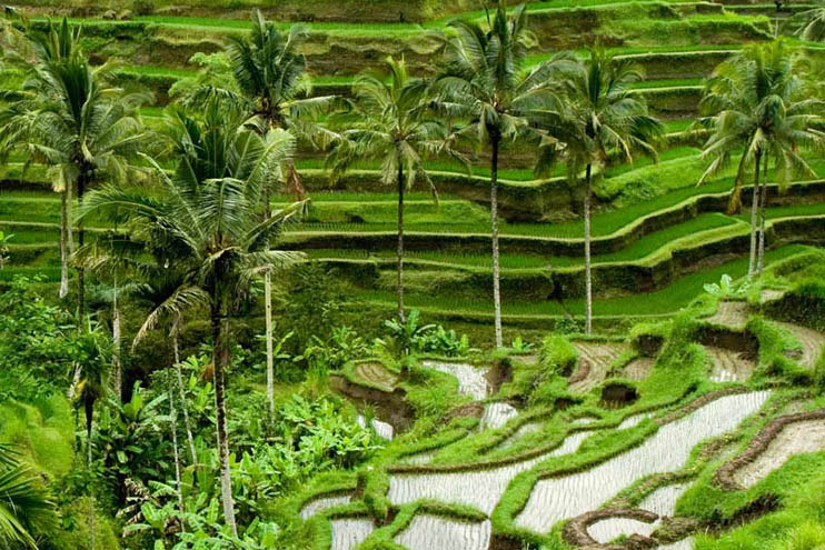 Learn more about Ubud and Seminyak, two popular yet distinctly different neighborhoods in Bali.