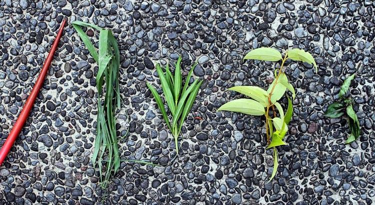 An assortment of herbs from chef Dean's organic garden.