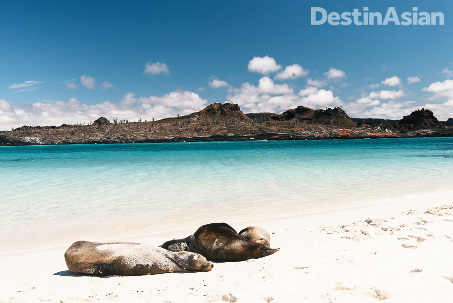 A posse of sea lions lounging on the beach at Sombrero Chino.