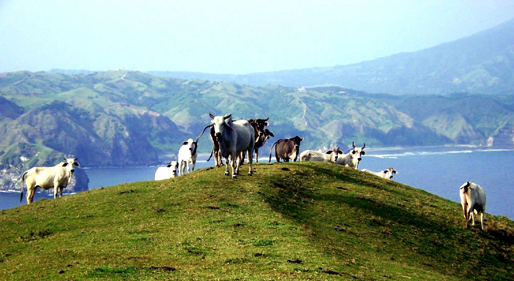The view from one of the hills on the islands of Batanes.