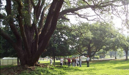 The Green Heritage walking tour in Bangalore.