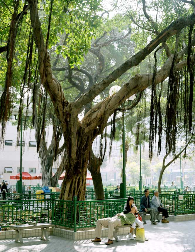 The shade of an old tree provides respite from the sun in Kowloon Park.