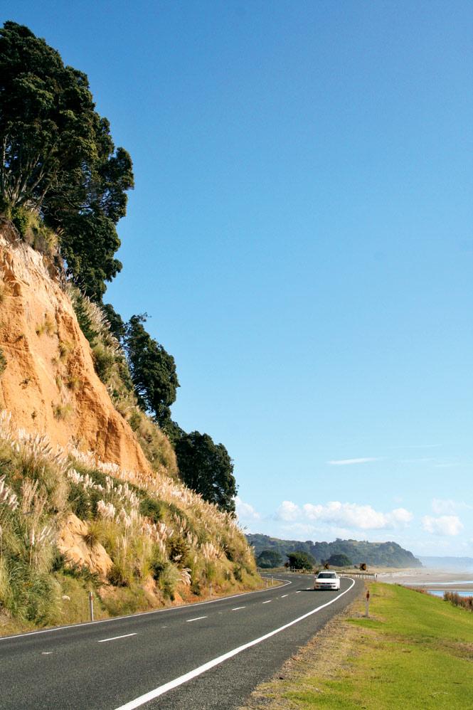 Roadside scenery in the eastern Bay of Plenty.
