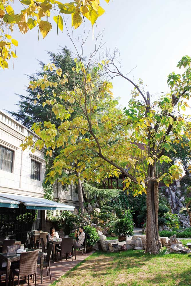 The garden-facing café terrace at Qing Wang Fu.