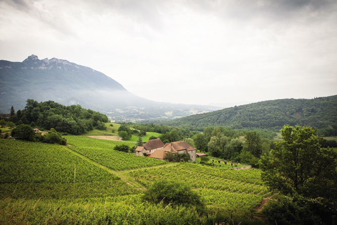 A local vineyard.