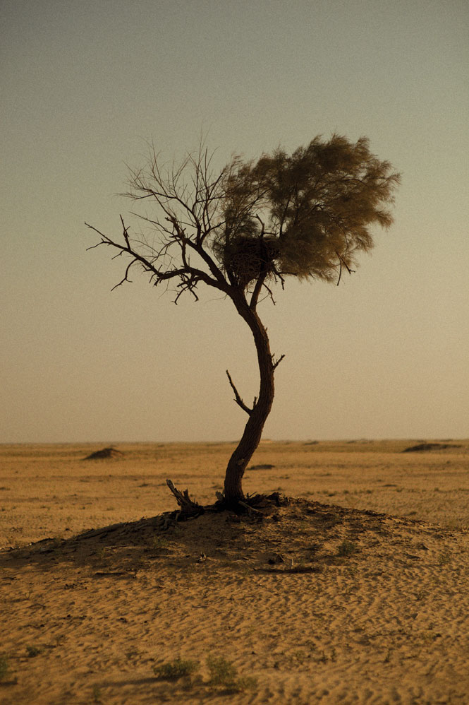 A lone thorn tree provides a rare sign of life in the desert.