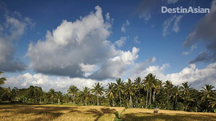 Rice Fields at Junjungan Village