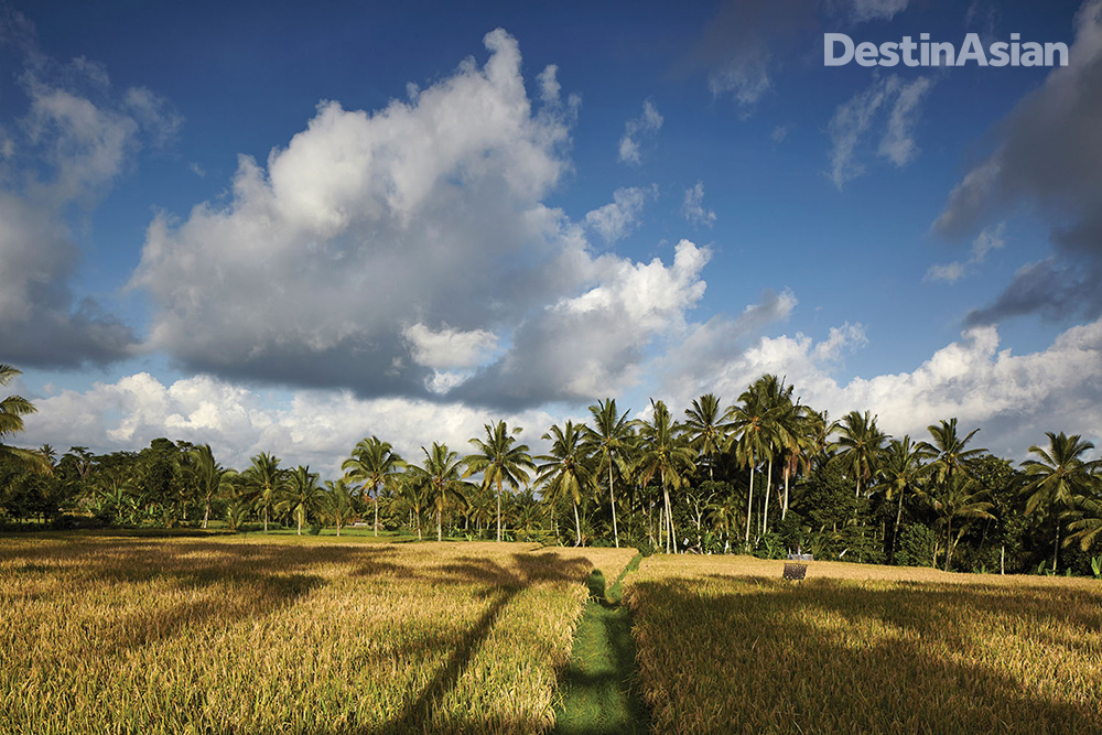 Rice fields at Junjungan village, just north of bustling central Ubud.