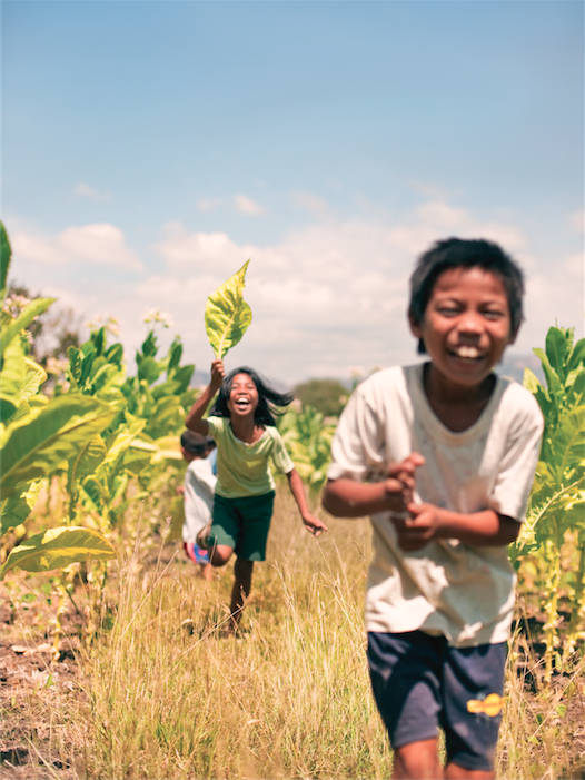 Farm kids playing in a field of tobacco, one of the Ilocos region's major crops.